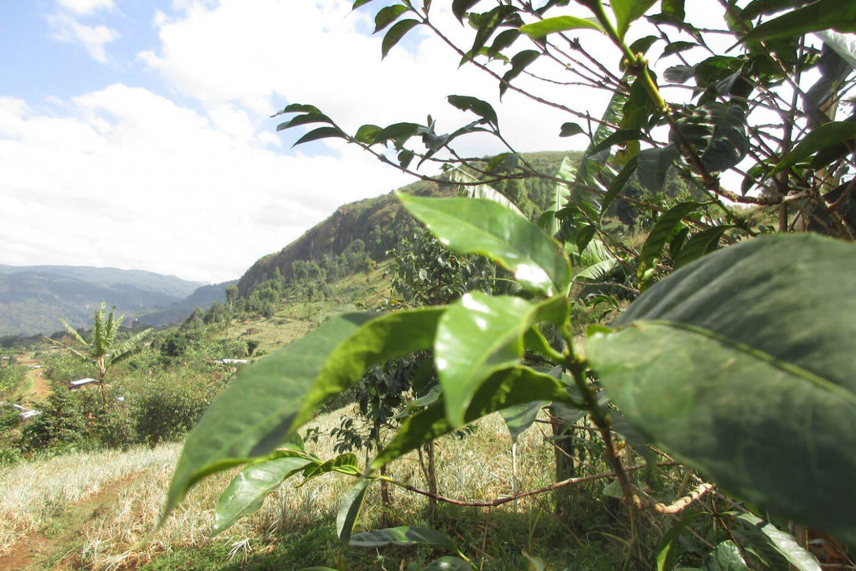 Honduras Landschaft
